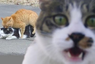 yeah creature features  cat photobomb